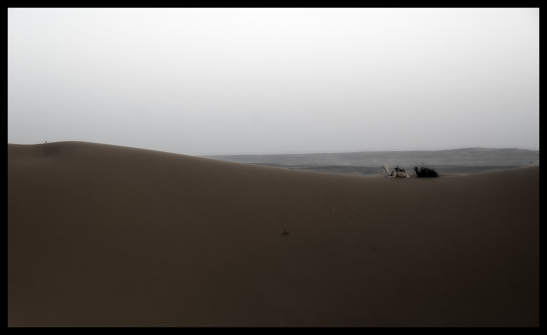 101218_DSC0054-camel Storie di Luce