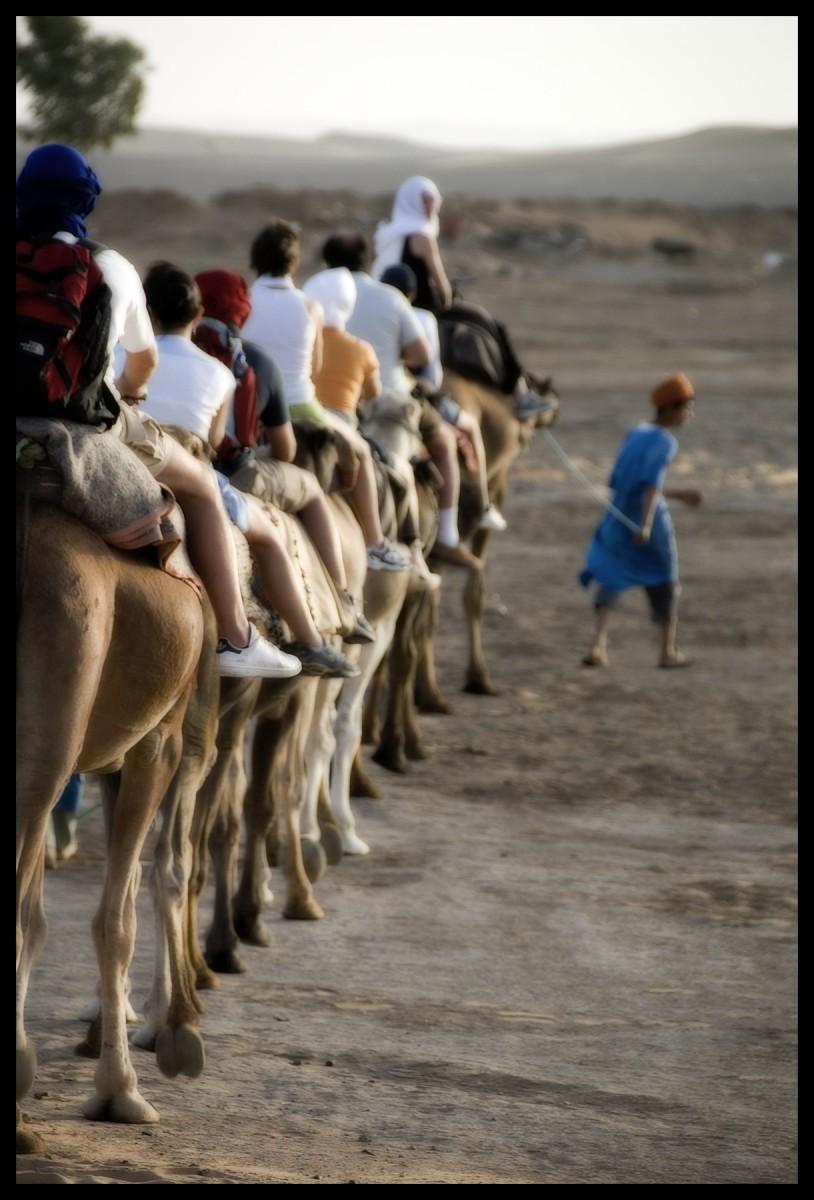 101418_DSC0066-camel-portraits Storie di Luce