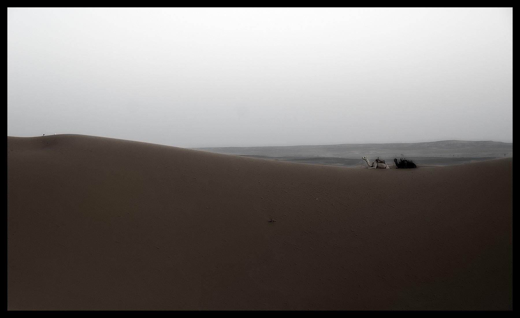101218_DSC0054 camel