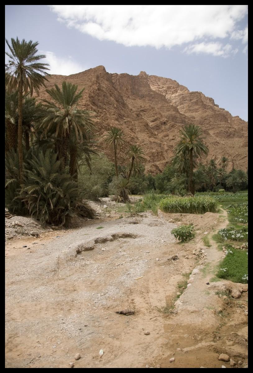 103018_DSC0052 oasis