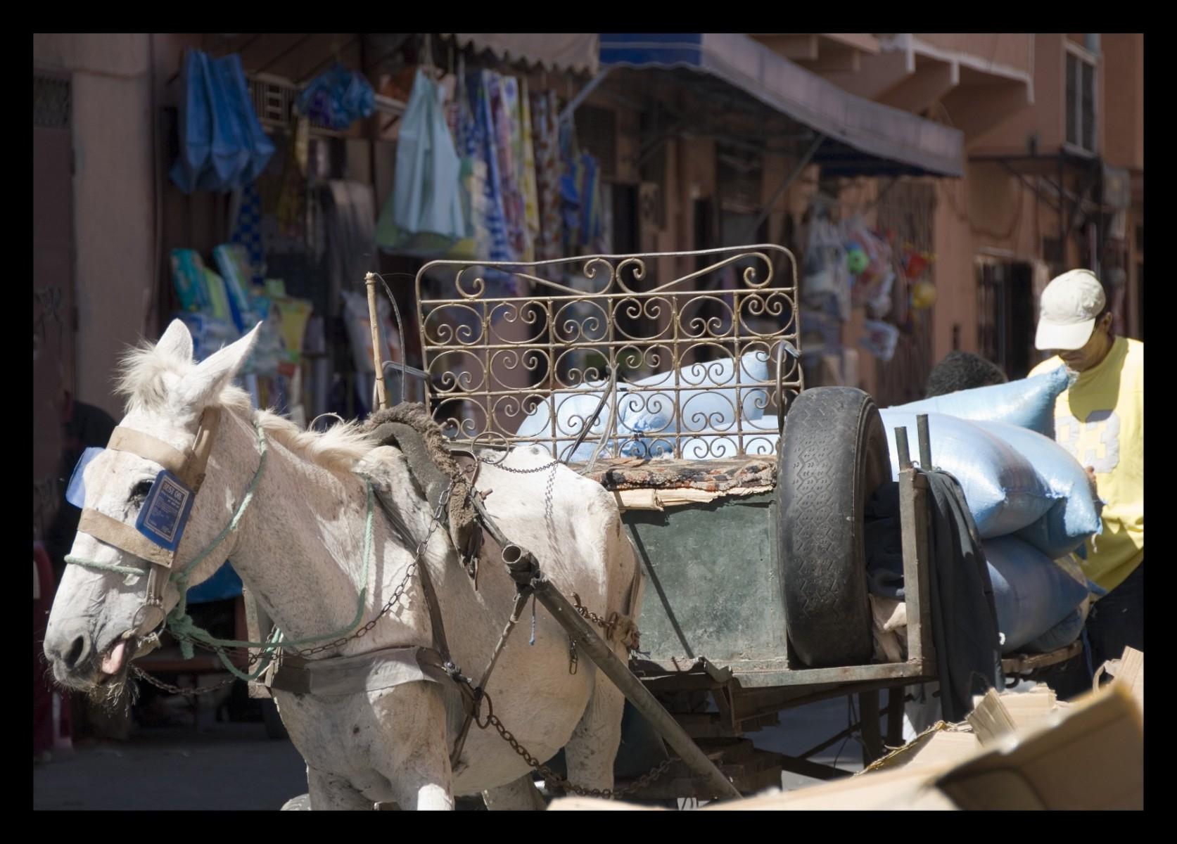 83614_DSC0096 marrakech