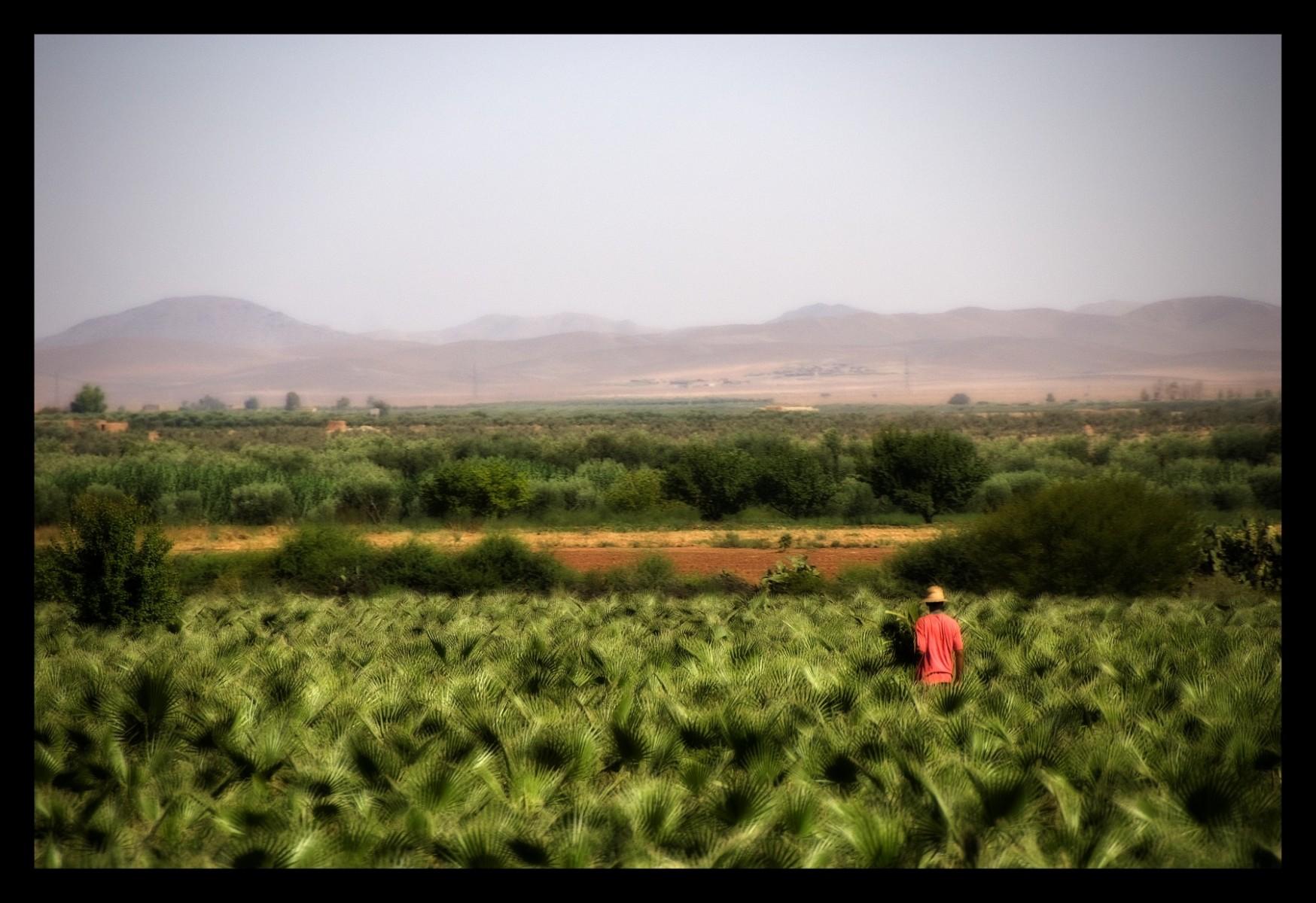 91315_DSC0011 on desert green