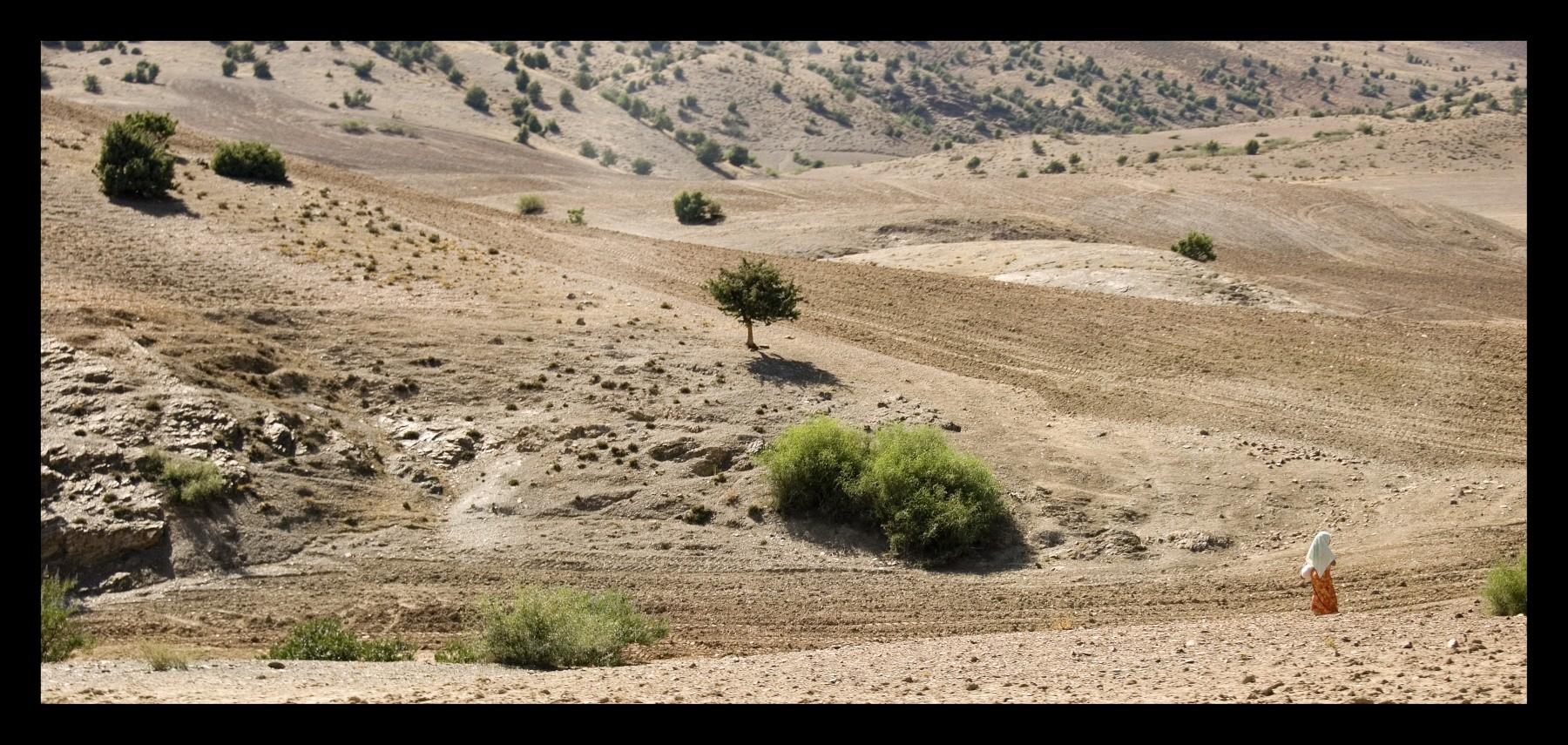 92415_DSC0087 on desert