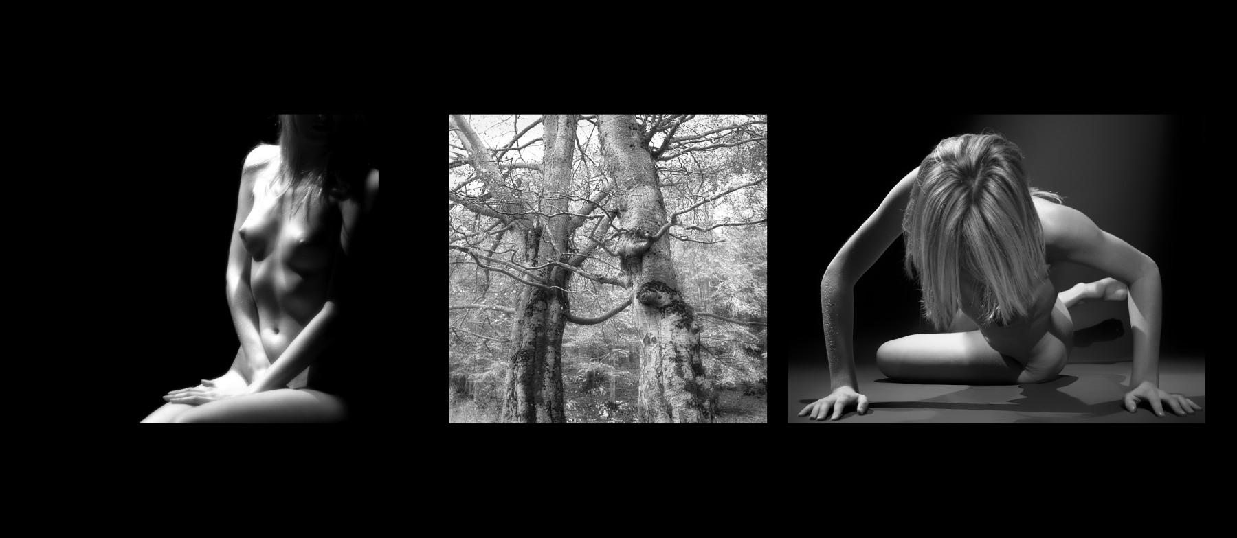 Naked Trees - Abbraccio
