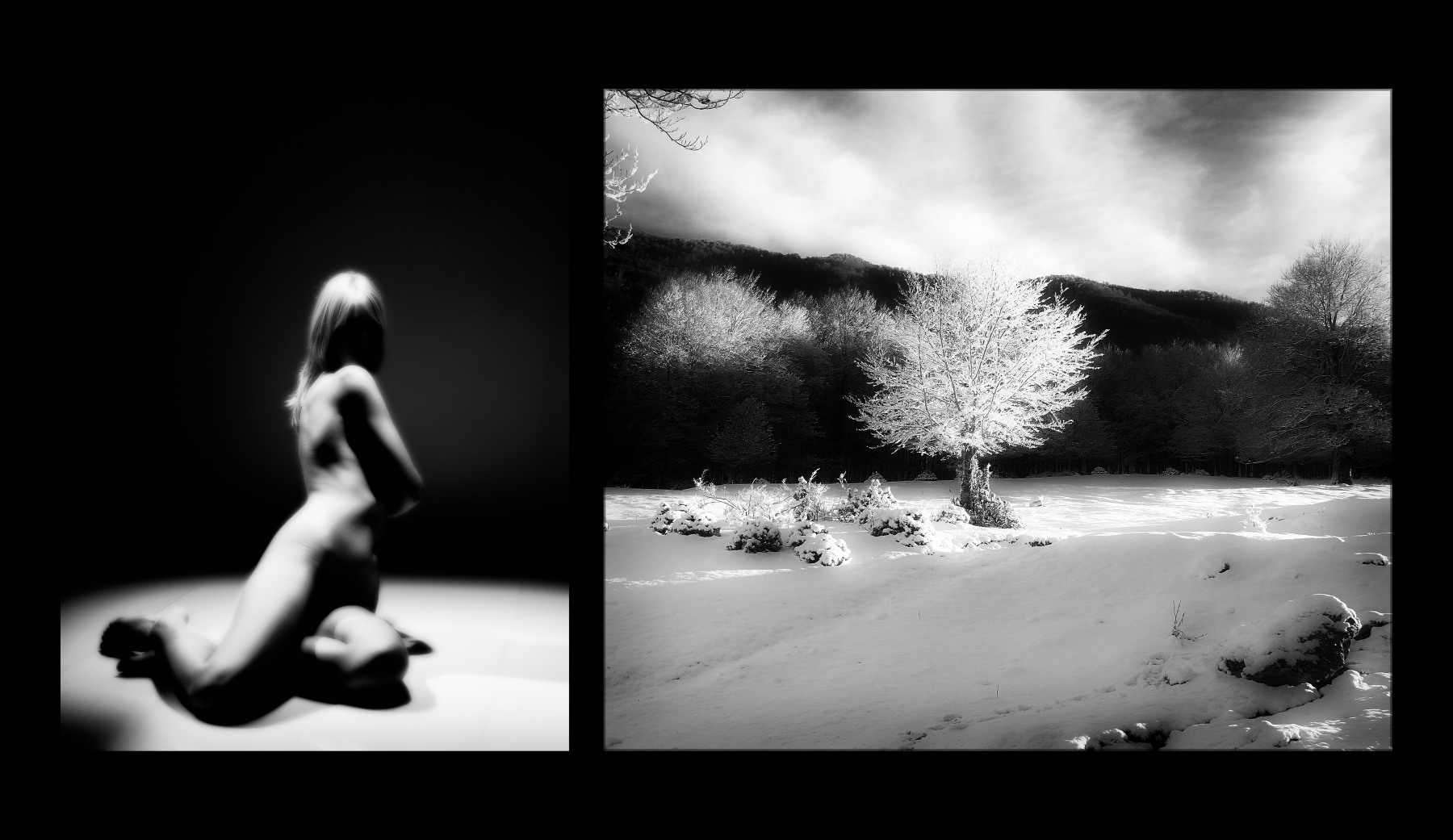 Naked Trees - Neve