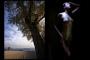 Naked Trees - Il Senso della Vita